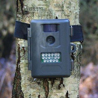 Wildlife Camera Images - Reverse Search